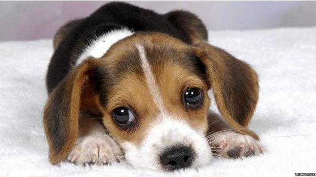 Casi nadie se resiste a los ojos de un cachorro, ¿por qué?