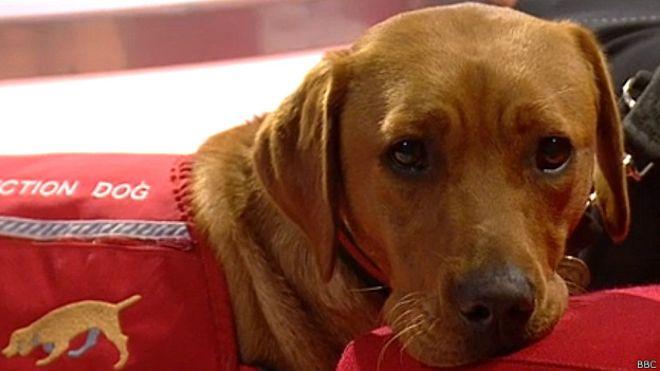 ¿Cómo entrenan a los perros para detectar el cáncer?