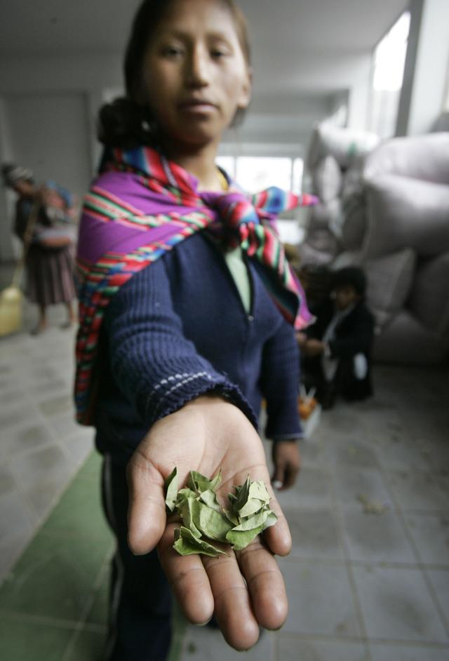 Acuerdo internacional para  destrucción de coca