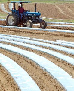 Cae la  cosecha en Alabama
