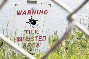 Aumentan casos de peligrosa infección causada por garrapatas en NY