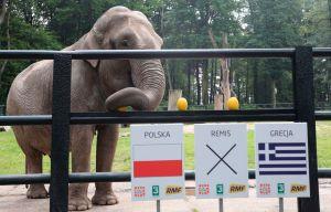 La elefanta Citta es el nuevo oráculo del fútbol