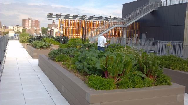 Edificio verde dará techo a cientos en El Bronx