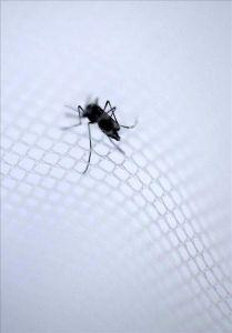 Reportan 111 casos de dengue en Puerto Rico