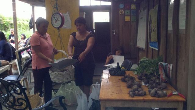 Familias transforman jardín en El Barrio y recogen sus cosechas