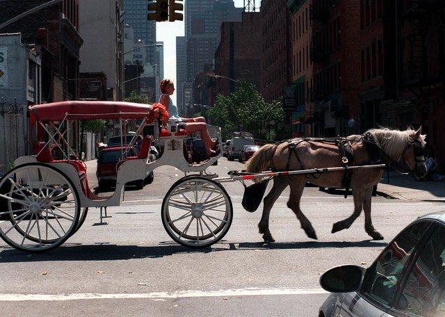 Otro caballo enloquece en Manhattan
