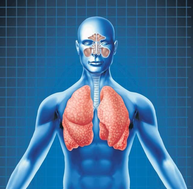 """""""Reparan"""" pulmones para trasplantes con colágeno y silicona"""