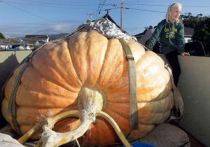 Cultivador de calabaza gana premio de $10,650 (Fotos y Video)