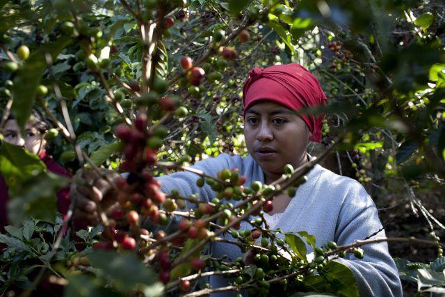 Lanzan campaña para ayudar a campesinos guatemaltecos