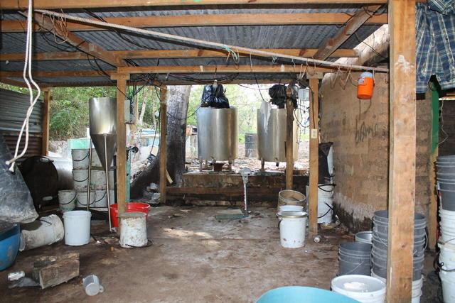 Decomisan narcolaboratorio y 2 tigres de bengala en México