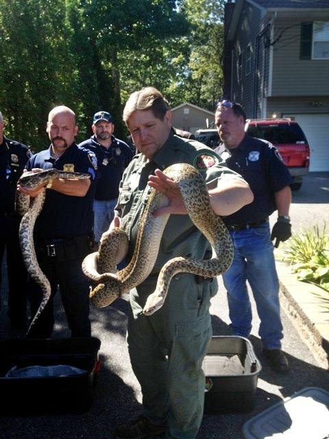 En proceso la mudanza de 850 serpientes en Long Island