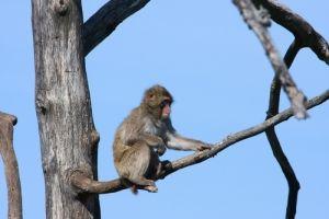 Autoridades en Florida desmantelan red ilegal de venta de monos