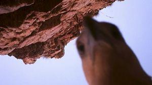 Pájaro roba cámara en Australia y toma fotos de altura (video)