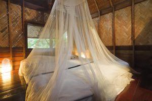 Alerta el Caribe por brote de fiebre chikungunya