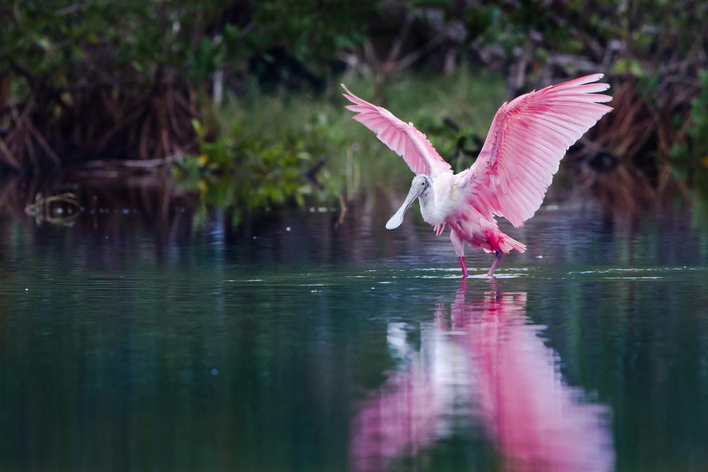 Scott destina $130 millones para restaurar Everglades