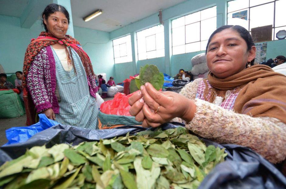 Hoja de coca evita males dentales, afirma presidente boliviano