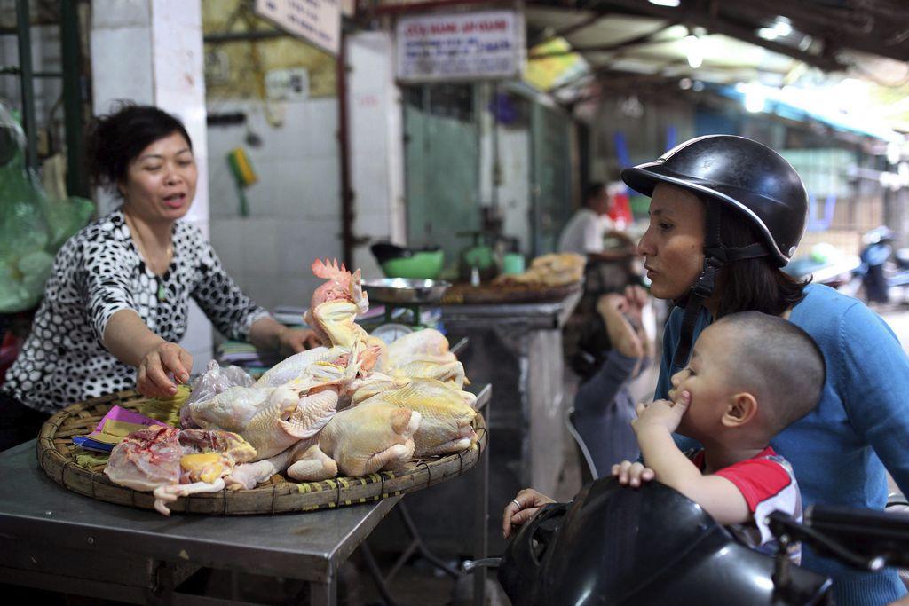 Japón sacrifica cientos de gallinas por gripe aviar