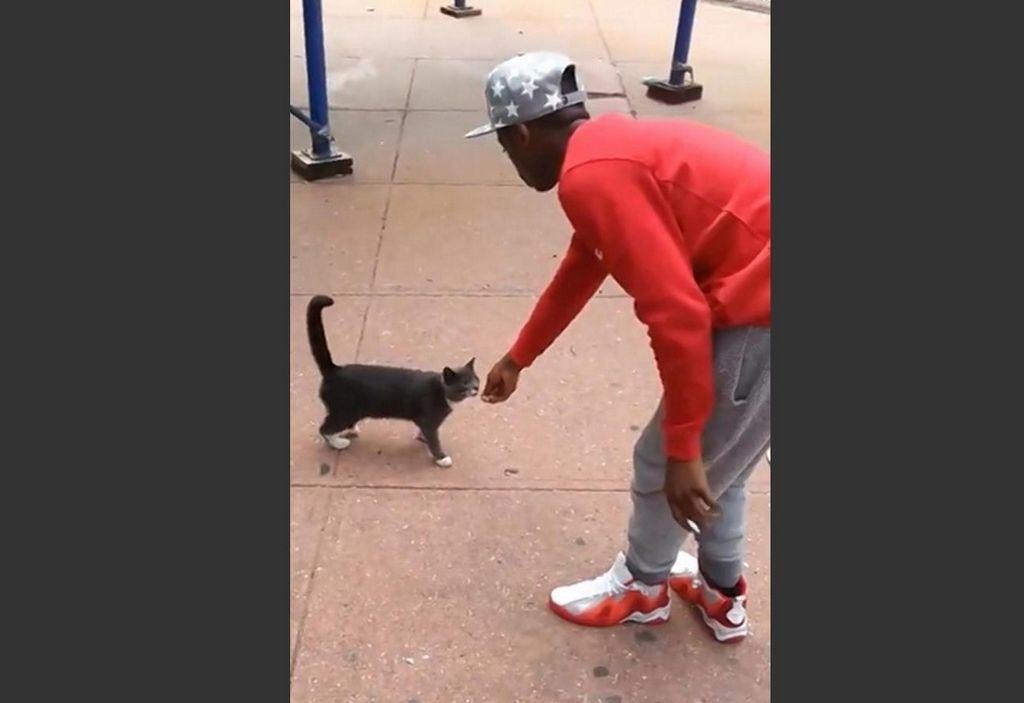 """Todos quieren adoptar a """"King"""", el gato pateado brutalmente en Brooklyn"""