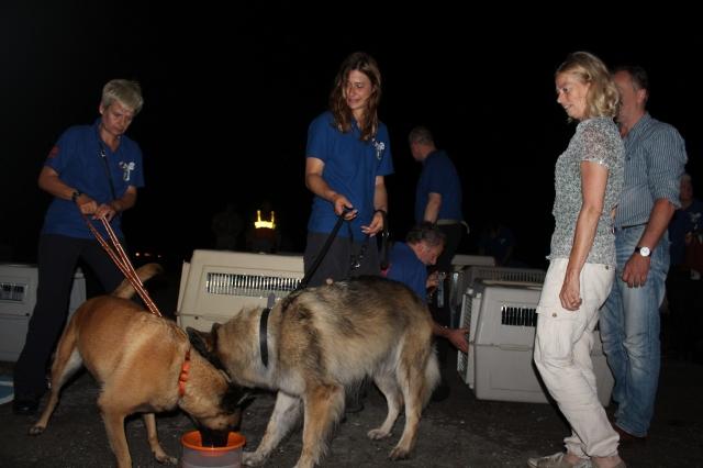 Perros y guías buscan a desaparecidas