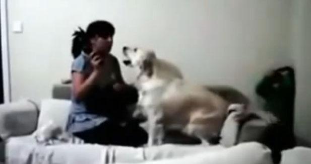 Perros impiden que una madre castigue a su pequeño hijo (video viral)