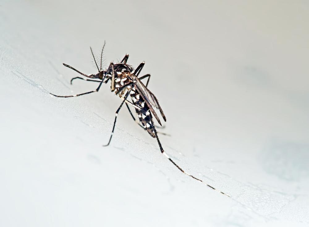 Brote de chikungunya provoca alerta en Venezuela