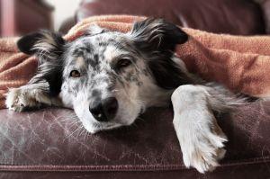 6 signos de que tu mascota está deprimida