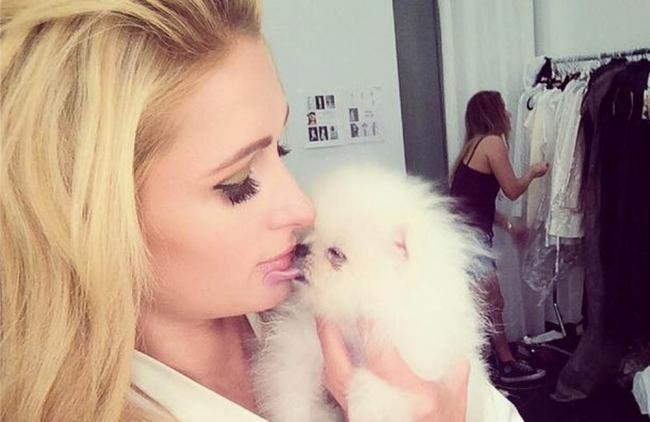 ¡Paris Hilton debuta a su nuevo perro como modelo!