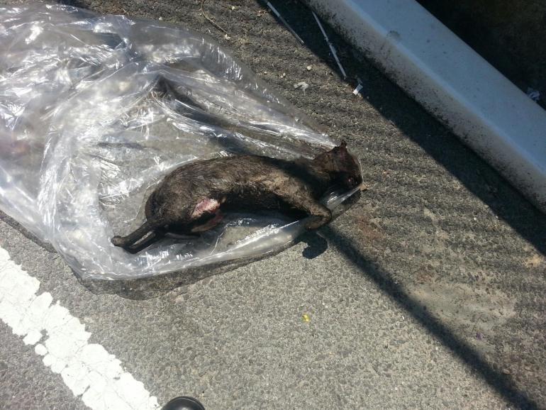 El gato fue pateado, golpeado varias veces con un carro de compras y luego quemado.
