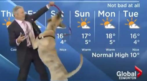 El perro que le robó el show a reportero del tiempo (video)