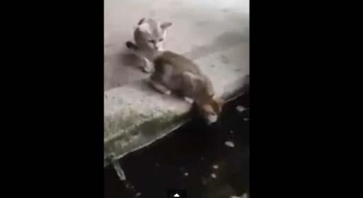 A este gatito la curiosidad casi lo mata…(video)