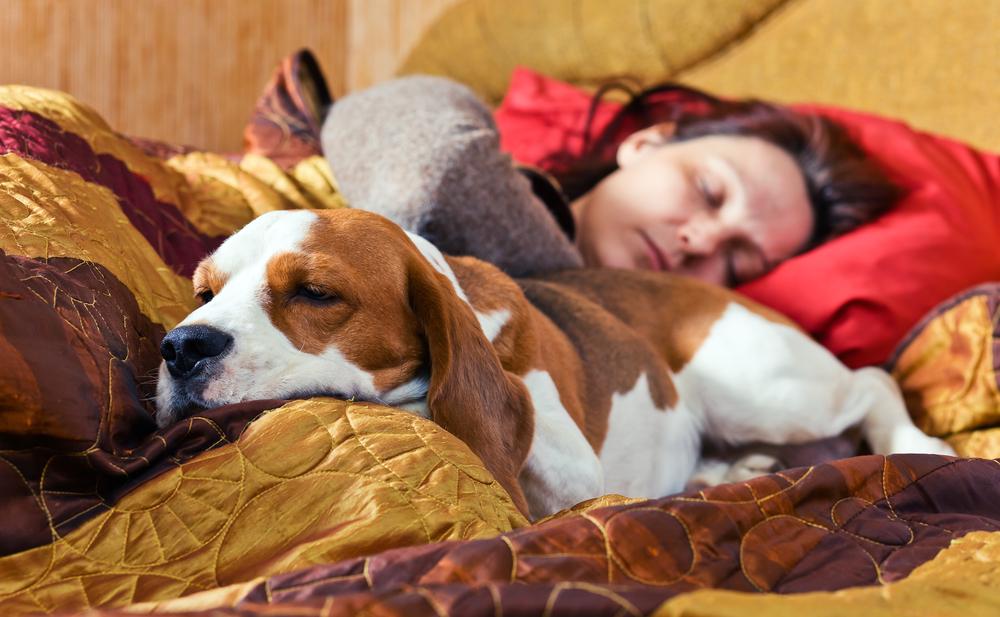 Duerme bien y vive saludable