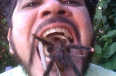 El hombre que agarra con su boca tarántulas y serpientes (videos)