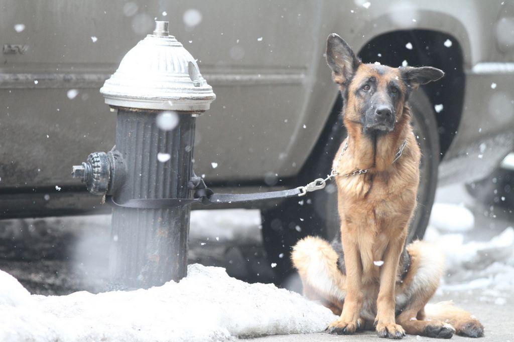 #BuenosDíasNYC: Cuidado con tu perro y la sal usada para la nieve