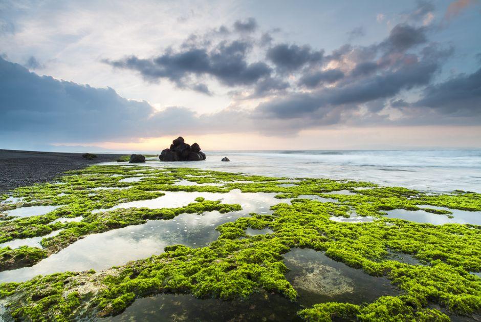 Gigantesca marea de algas tóxicas afecta costas de EEUU