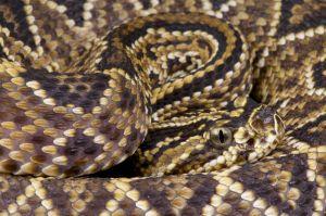 ¿Por qué el antídoto contra el veneno de serpientes está por terminarse?