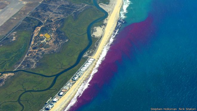 ¿Por qué están tiñendo de rosa el océano en California?