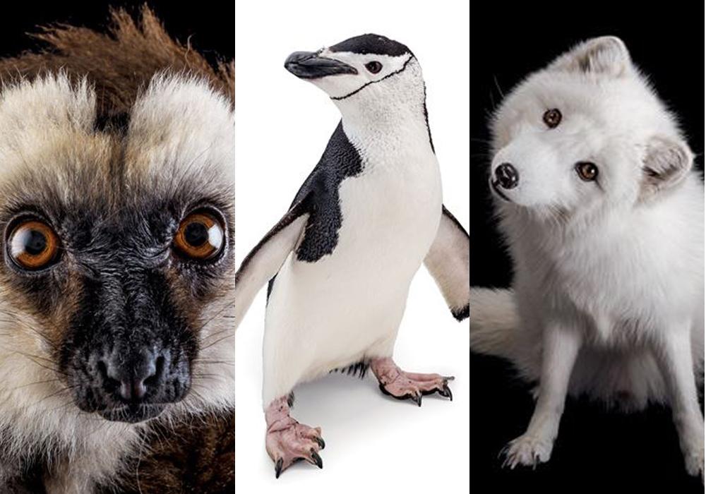 Los hermosos animales del proyecto Photo Ark de National Geographic