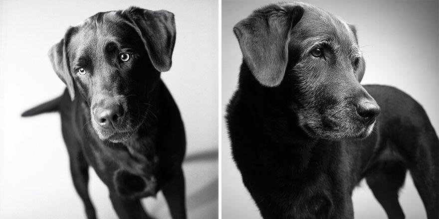 Así envejecen nuestros perros