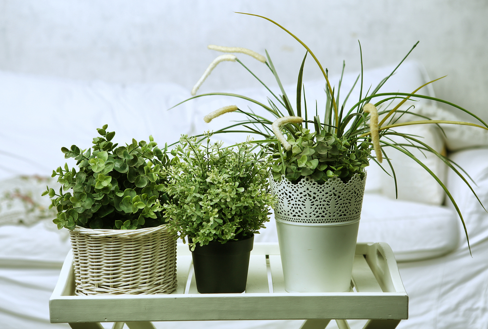 Purifica el aire de casa con estas plantas (la NASA las recomienda)