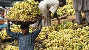 Por qué las bananas están en peligro de extinción