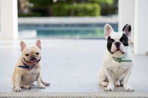 ¿Está tu familia preparada para una mascota?