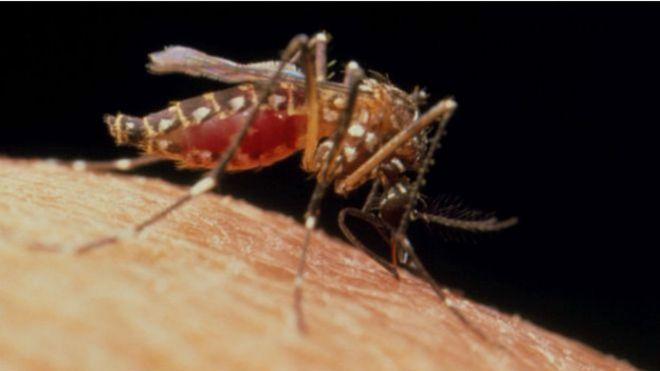 ¿Qué pasaría si matamos a todos los mosquitos que transmiten zika, dengue y chinkungunya?
