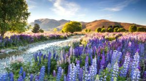 Paraísos de luz: las mejores fotos de jardines de todo el mundo