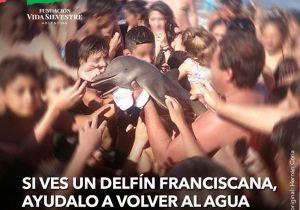 Turistas matan a pequeño delfín por tomarse selfies