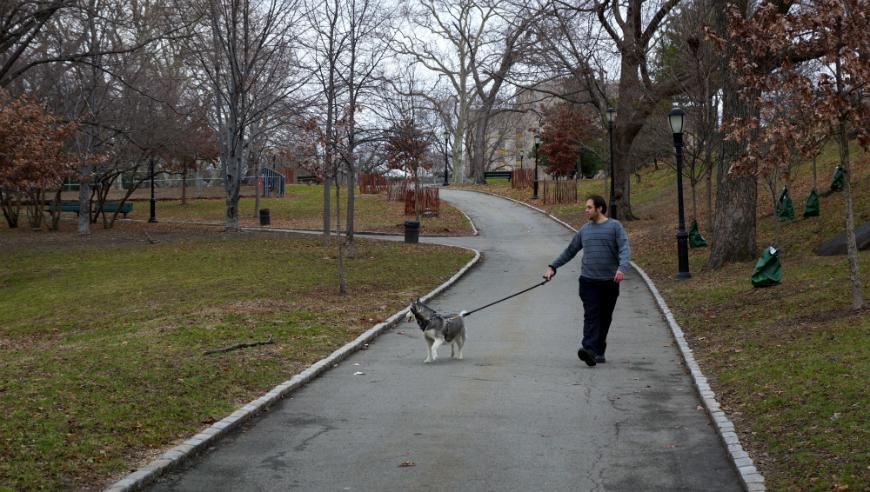 ¡Atención! Alguien está envenenando animales en Bay Ridge