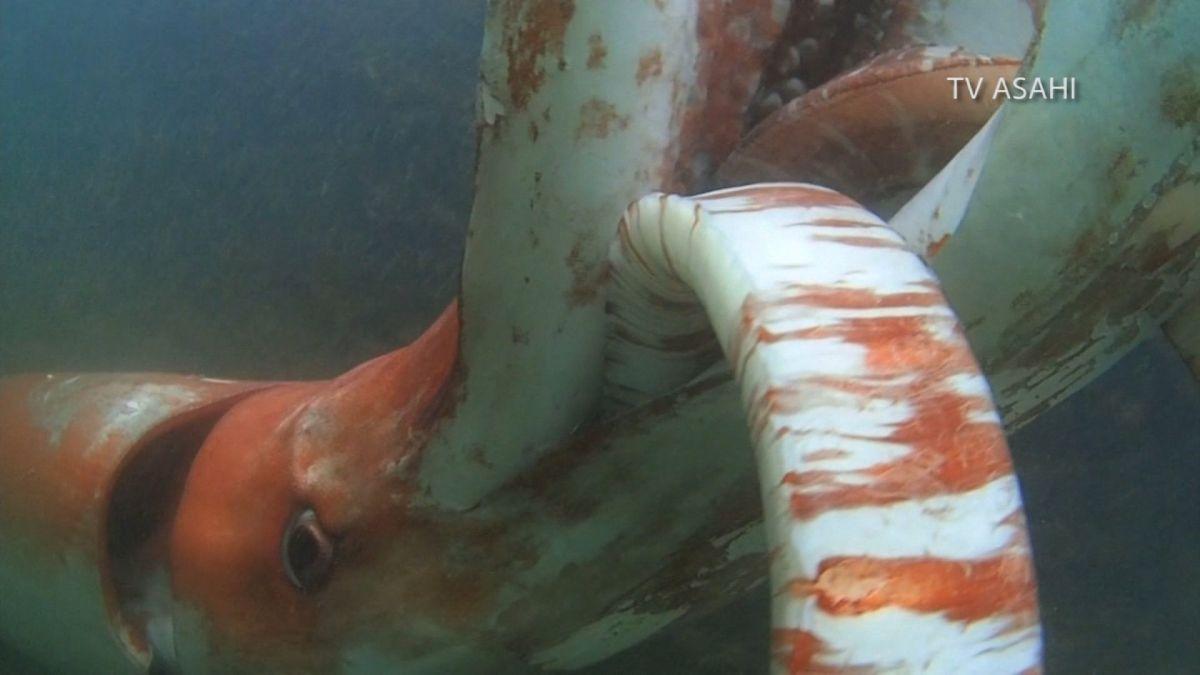 Impresionante kraken gigante filmado en las costas de Japón
