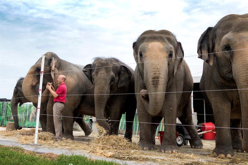 El circo cede a presiones de PETA.