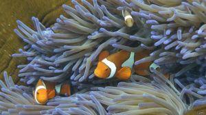 Calor está matando la barrera de coral más grande del mundo