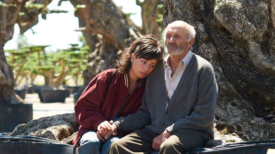 El Olivo, de Icíar Bollaín: nunca un árbol hizo llorar y reír tanto