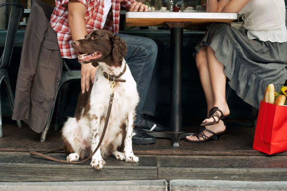 A partir de abril se podrá llevar perros a restaurantes de NYC